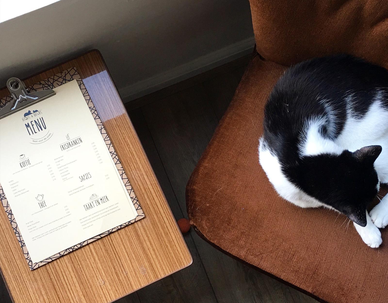 Kattencafe ontwerp